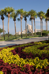 Examples of Florida Commercial landscaping
